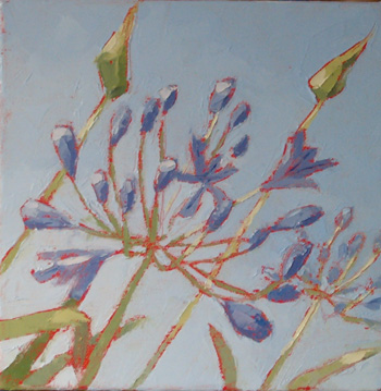 Agapanthus Blues